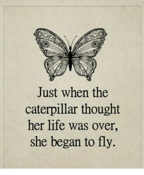 just-when-the-caterpillar-thought-her-life-was-over-she-4866922