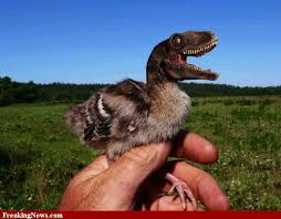 1-dinosaur-bird.jpeg?w=558